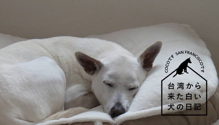 Vol.117台湾から来た白い犬の日記