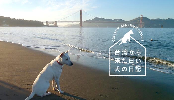 Vol.113台湾から来た白い犬の日記