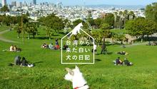 Vol.211台湾から来た白い犬の日記
