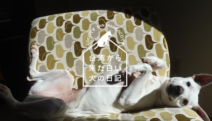 Vol.120台湾から来た白い犬の日記